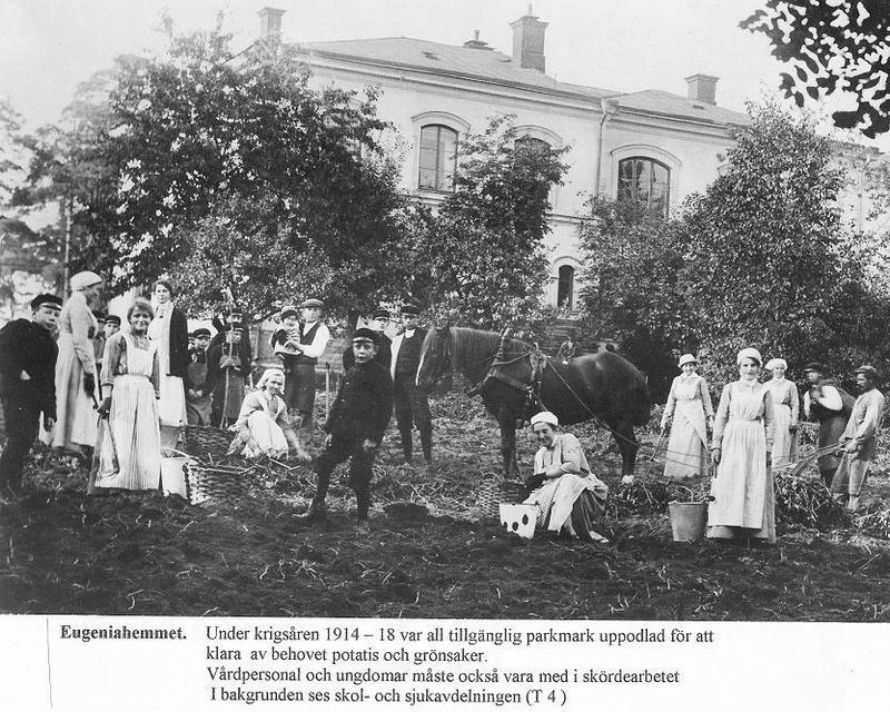Skördearbete 1914 - 1918.