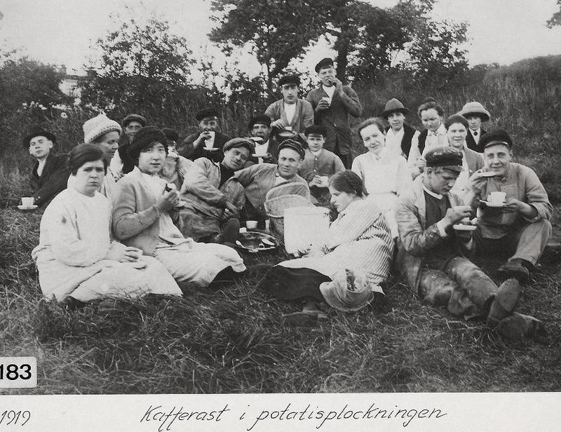 Kafferast i potatisplockningen 1919.