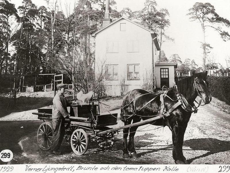 Hästen Brunte och tuppen Kalle 1929.